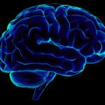 Human Brain Cognition