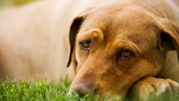 Lyme Disease in Dogs in United States | Canine Tick Borne Disease